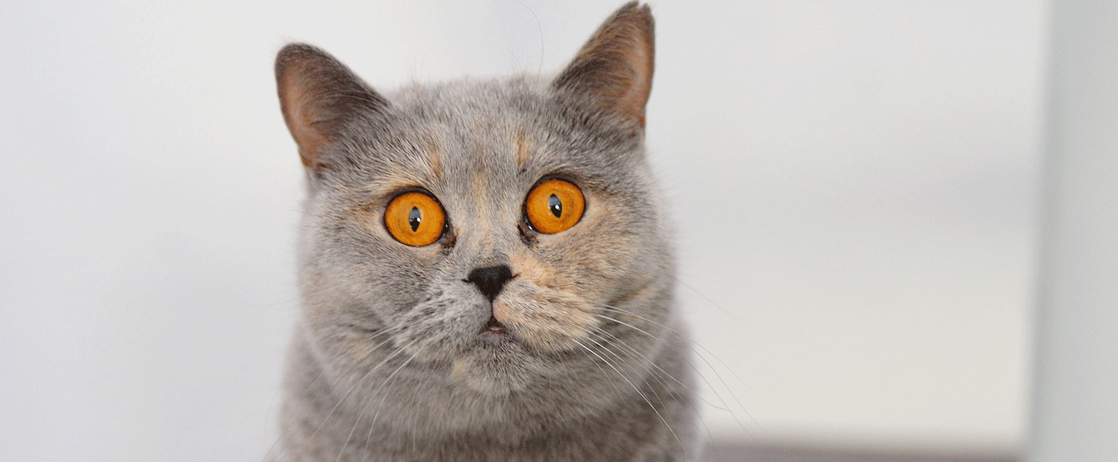 <p>Herzlich Willkommen auf der Website der Tierarztpraxis Au!</p>